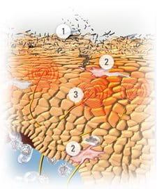 Specialista di dottore in eczema